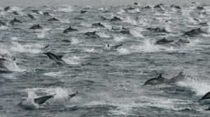 DolphinsMegaPodSanDiego021613